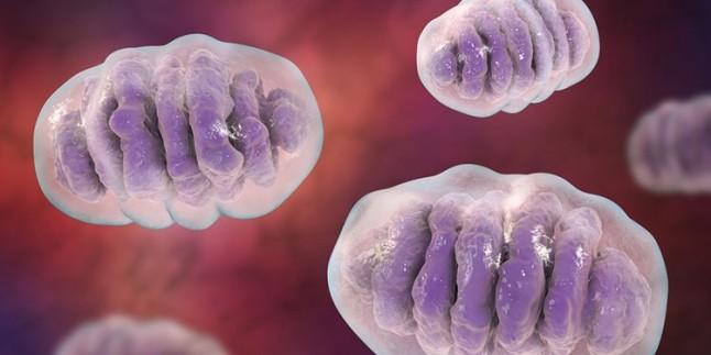 Kısırlık konusunda kadında ve erkekte yerine konması en güç olan mineral ve vitaminler neler? Dr.Murat Berksoy