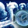 Tüp bebek tedavisi yumurta toplama işlemi OPU hakkında bilgiler