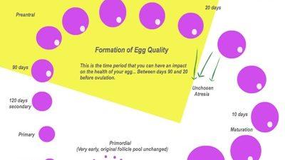Tüp Bebek tedavilerinde sağlıklı yumurta vermek için 90 gün -1-