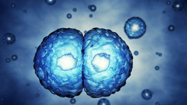 Embriyonun salgısından sağlığı hakkında bilgi alınabilir.