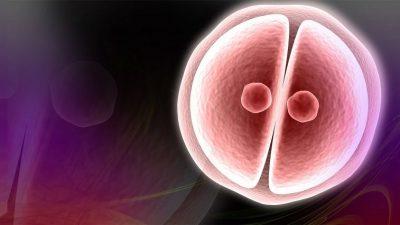 Embriyo kalitesi, Kadın yaşı ve FSH , spermde anomalilerle başetme ,düşük sonrası kanal tıkanıklığı,Tüp Bebek Tedavilerinde Hasta Soru ve Doktor Cevapları -87-