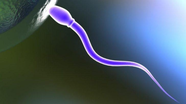 Sperm sayısında düşme , Morfoloji sıfır olunca ,varikosel ameliyatı , olgunlaşmamış spermler işe yarar mı ,Tüp Bebek TedavileriHasta Soru ve Doktor Cevapları -83-