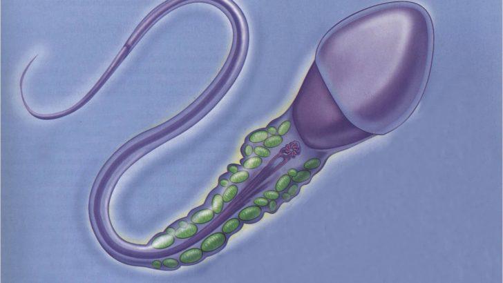 Tüp Bebek Tedavisinde Embiryo Kalitesi