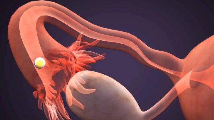 Kadın Üreme Hormonları Nelerdir ?