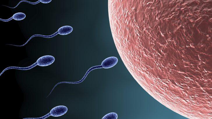 Spermin yumurtayla birleşmesi ne kadar sürer?