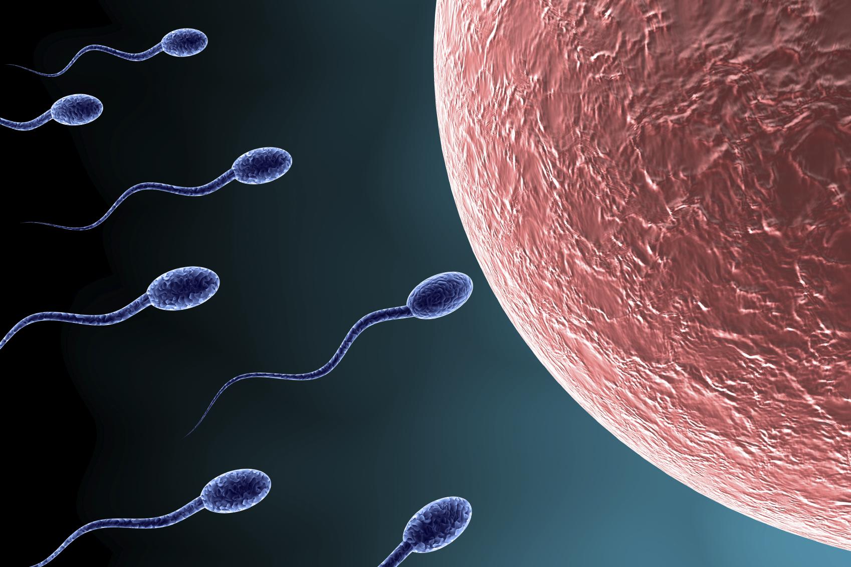 zachatie-dvumya-spermatozoidami