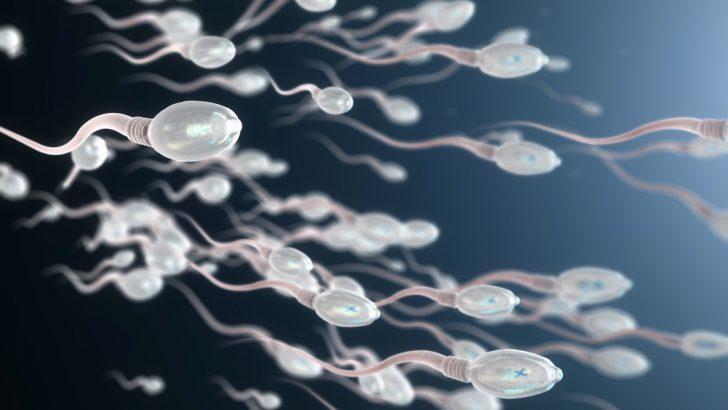 Spermin yapısı nedir nelerden oluşuyor?