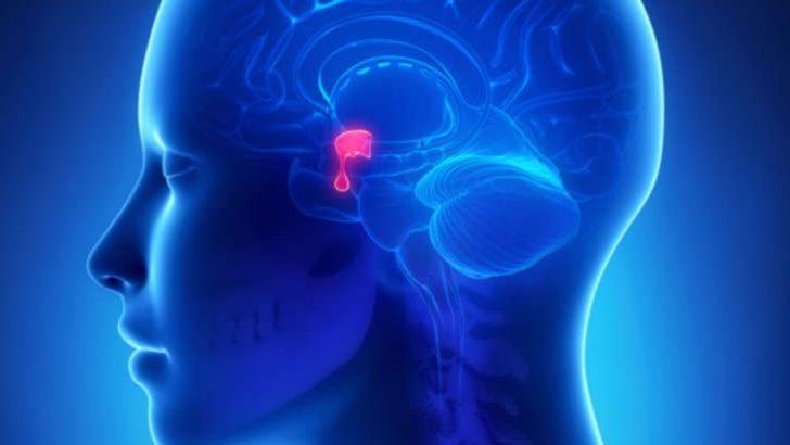 FSH Folikül uyarıcı hormonun Erkek ve kadında değerleri ve problem nedenleri