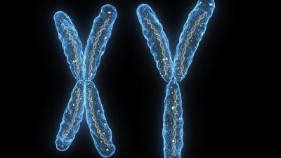 Kromozom anormalileri neden ölü doğum veya düşüğe sebep olur?