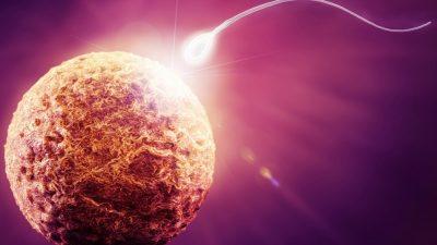 Tüp Bebek Tedavisinde Kaliteli Yumurta ve Sperm