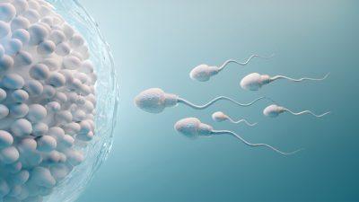 Yumurta ile sperm nasıl birleşir? Yumurtanın döllenmesi.