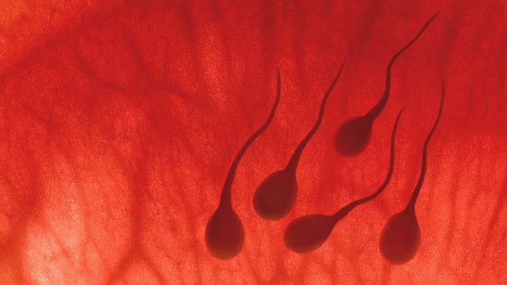 Spermde DNA da ve morfoloji de bozukluk olunca çocuk sahibi olunamaz mı?