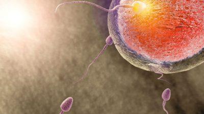 Tüp bebek tedavilerinde etkili sperm seçimi nasıl yapılıyor? Prof.Dr.Şahin Zeteroğlu