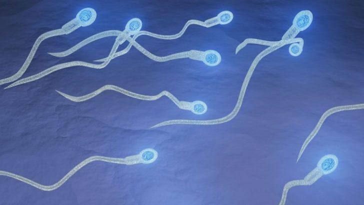 Tüp Bebek Tedavisinde en iyi sperm ve yumurta nasıl seçiliyor? Prof.Dr.Volkan Noyan