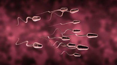 Sperm sayısını artırmak ve güçlendirmek
